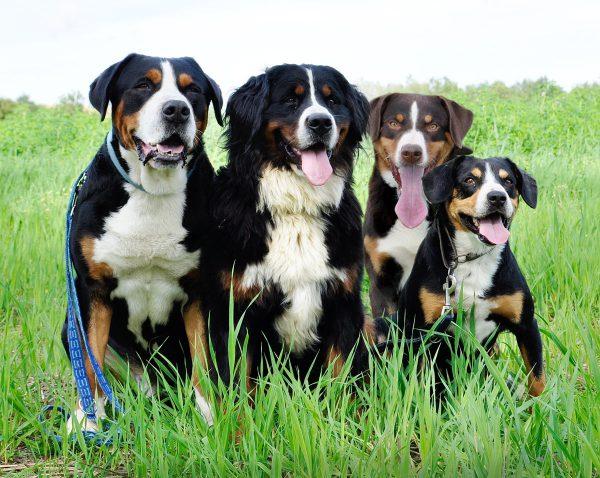 Hunde fahren in großen Ruhrgebietsstädten gratis in Bus und Bahn